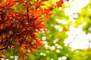 秋 イメージ写真